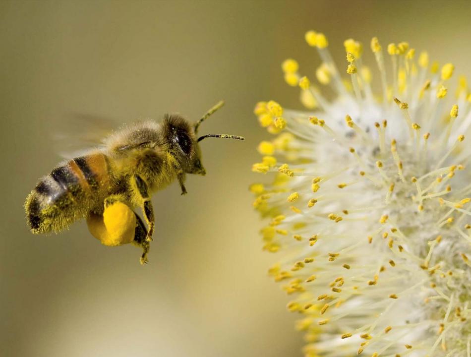 Le miel, nouveau must have de la cosmétique
